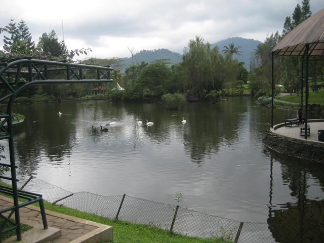 kolam angsa